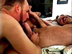 bear sex